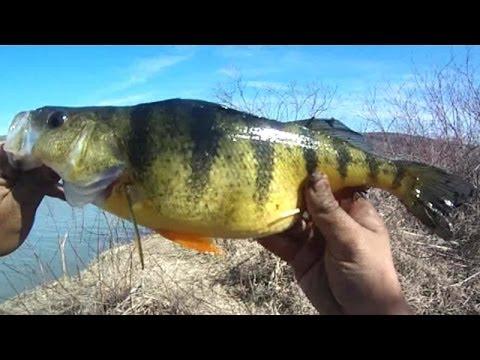 "Bait Fishing #43 - Nightcrawler Fishing for 14""+ Jumbo Perch and Big Brown Bullhead in Spring"