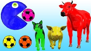 Learn Colors with Animals Colorful Pacman Eating 3D Soccer Balls   Learning Animal Names for Kids