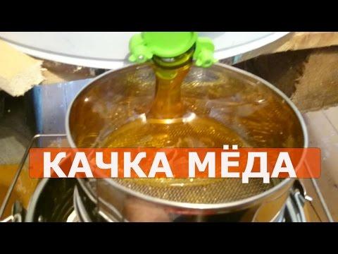 Как достают мед из сот