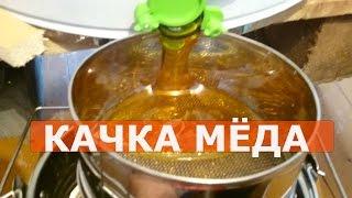 ОТКАЧКА МЁДА/как качаю мёд