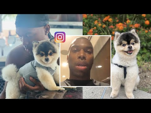 Daniel Sturridge Pleads for the Return of His Stolen Dog: 'I'll Pay Anything'
