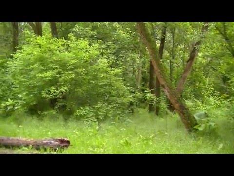 Лес в окрестностях города Азова