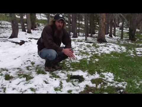 Guide Tip - What can we learn from a bear's scat?