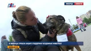 В Люберцах прошла акция в поддержку бездомных животных