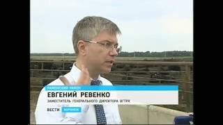Как в Воронежской области получают элитную говядину, знаменитую на всю страну