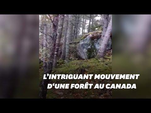 Cette forêt 'respire' pendant la tempête au Canada