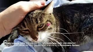 Дети спасают котика с отрезанными лапами  | волонтеры  помогают животным | save the cat