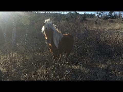 2017 Appalachian trail Damascus to Pearisburg