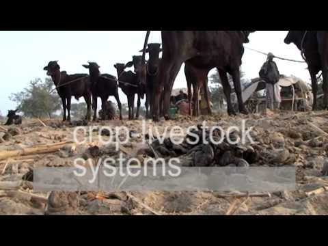 Introducing Integrated Soil Fertility Management (ISFM) in Africa