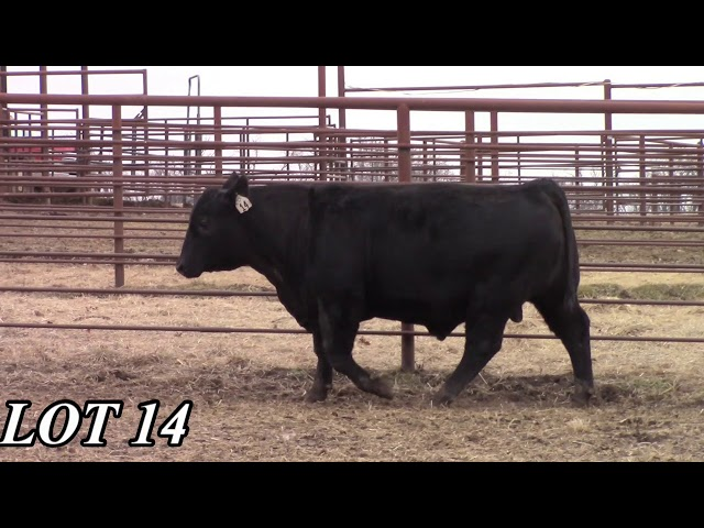 Mead Angus Farms Lot 14