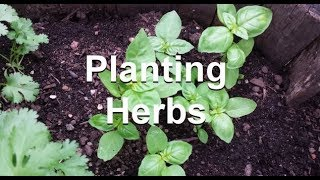 Starting Herbs from seed & patience when Growing Them - The Wisconsin Vegetable Gardener