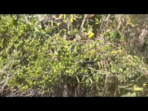 Adventurous Kids: Everglades National Park - Shark Valley