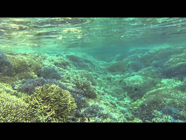 Goproで撮った西表島