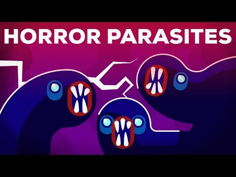 The Most Gruesome Parasites – NTDs Explained