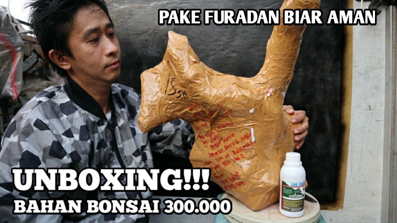 UNBOXING Paket Bahan Bonsai Besar Dari Gunung Kidul