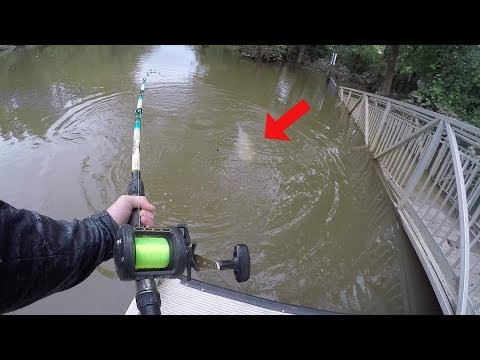 Catching HUGE Catfish In The Backwaters Of A FLOODED CREEK