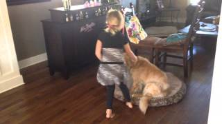 How to Train Your Golden Retriever by Tomi (Age 6)