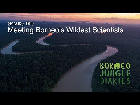Borneo Jungle Diaries: Episode One - Meeting Borneo's Wildest Scientists [UHD/4K] SZtv
