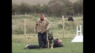 K9 Xena Protection Dog Control And Bite Suit Attacks