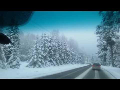 La nieve estaba callendo los pinos se congelaban