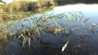 Рыбалка около Чардары на змейголову