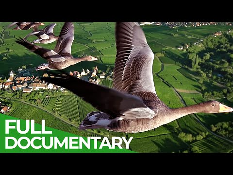 Birds of Passage - A Secret Journey Through the Skies   Free Documentary Nature