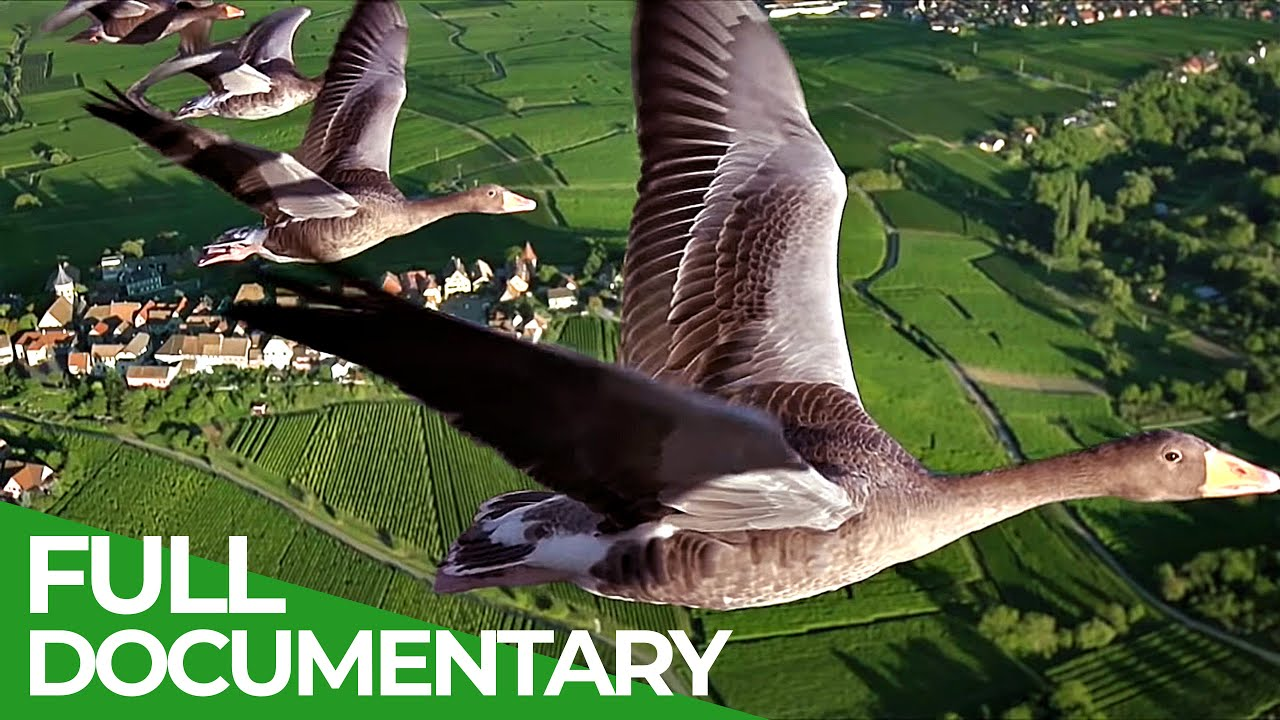 Birds of Passage - A Secret Journey Through the Skies | Free Documentary Nature