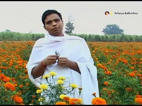 Ayurvedic Benefits of Mustard African Marigold (गेंदा) for Mouth Ulcers | Acharya Balkrishna