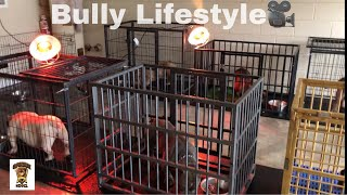 Life Of A Exotic Bully Breeder...