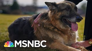 Right-Wing Newsmax Host Greg Kelly Went After Biden's Dog | The 11th Hour | MSNBC