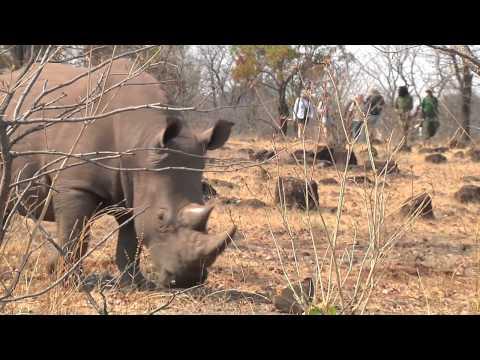 Activities at Tongabezi, Livingstone, Zambia