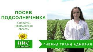 Посев гибрида подсолнечника Гранд Адмирал в с. Полигон, Николаевской области