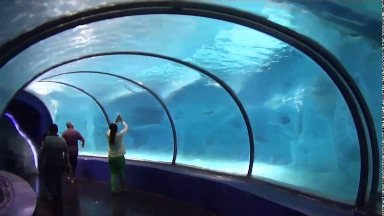 Chimelong Ocean Kingdom By Reynolds Polymer Technology