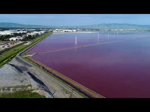 Newark California's Cargill Salt Ponds