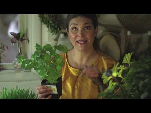 Dela sättpotatis och odla material till pilflätning Hemma hos Jessica v11