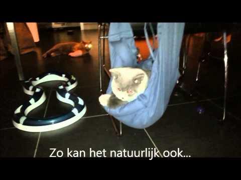 4LazyLegs draagtas voor katten...