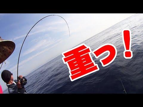 【世界最大種】の骨を持つイカが釣れた!種子島