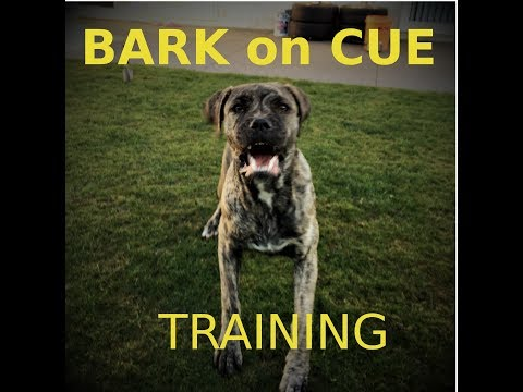 Train your Guard Dog to BARK on Cue!
