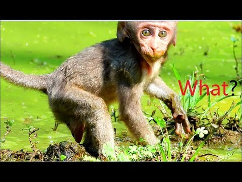 While Baby Monkey Stay A Lone & See A Dog Run