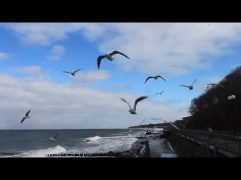 Hungry birds swoops on girl, on Baltic seabirds swoops on girl, on Baltic sea