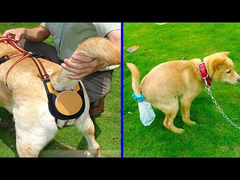 NEW DOGS GADGETS INVENTION YOU MUST HAVE - If You Have Any Puppies or Dogs