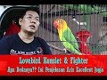 Suara Burung Lovebird Konslet Fighter Apa Bedanya Begini Penjelasan Aris Excellent Jogja  Mp3 - Mp4 Download