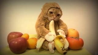 Смешные животные 2017 (Animal funny video 2017)