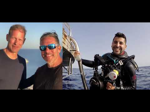 Emperor Elite; Red Sea Diving Delights And Lots Of Dolphins