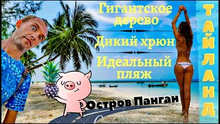 ТАЙЛАНД 2019 - ОБЗОР ОСТРОВА ПАНГАН VLOG #6
