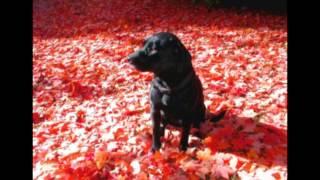 My Old Friend - Saying goodbye to a wonderful dog