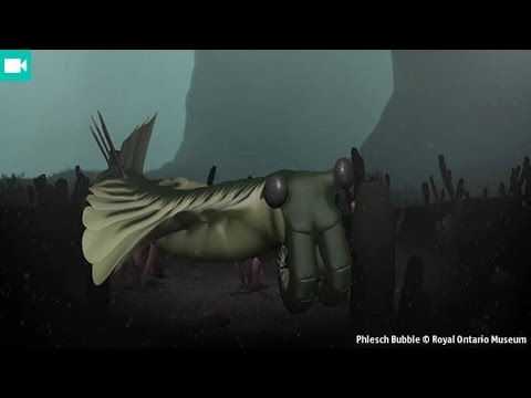 What caused the Cambrian explosion?