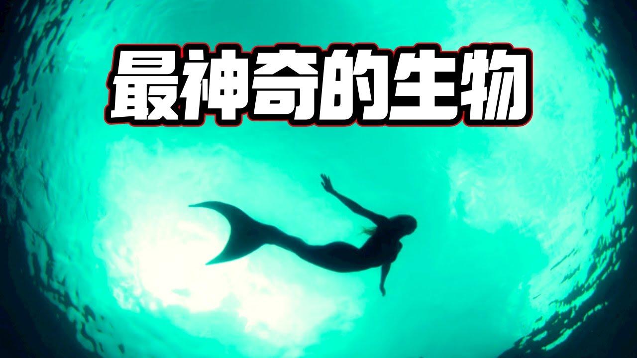 一個關於「人魚」不能說的終極秘密,原來「人魚的真相」竟然是這樣的!(2021)|【你可敢信 & Nic Believe】