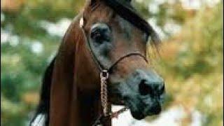 Клип для моей любви{ А мой смысл жизни это конный спорт}