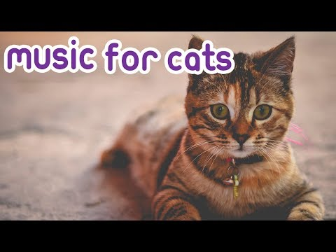 Music For Sphynx Cats! Relax Your Sphynx, Hairless Cat! - Helped 4 million Cats - Pet Therapy!